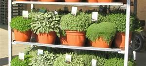 Mediterrane Pflanzen Liste : mediterrane pflanzen green pflanzenhandel gmbh ~ Watch28wear.com Haus und Dekorationen