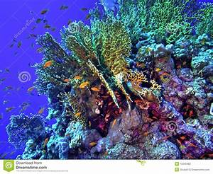 Coral Reef / HDR Version Stock Photography - Image: 10345482