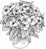 Coloring Adults Pages Flower Printable sketch template