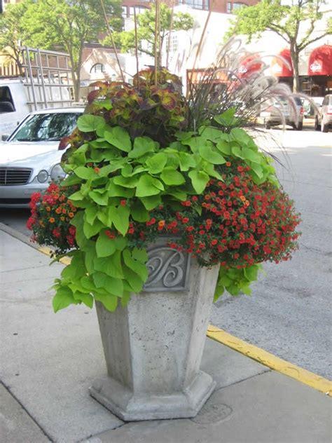 big flower pot arrangements 17 best images about sweet potato vine on pinterest container gardening planters and shade plants