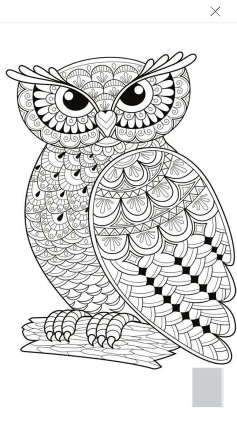 owl coloring page coloring pagesgeneral pinte