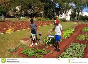 Manual Irrigation Stock Image  Image Of Boys  Traditional