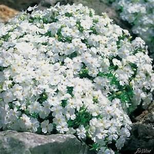 Winterharte Pflanzen Liste : oltre 25 fantastiche idee su winterharte pflanzen su ~ Michelbontemps.com Haus und Dekorationen