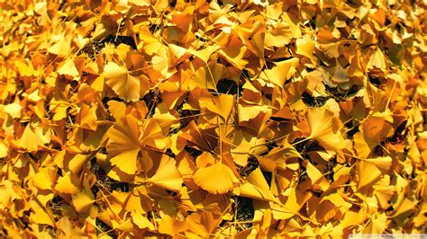 Gold Autumn Wallpapers by Golden Autumn Leaves Wallpaper 1920x1080