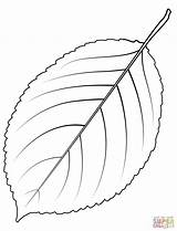 Coloring Tree Leaf Cherry Wild Redwood Giant Sequoia Printable Dot Leaves Trees Drawing Supercoloring sketch template