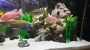 Aquarium Als Raumteiler : malawi aquarium als raumteiler youtube ~ Michelbontemps.com Haus und Dekorationen