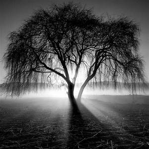 Best 25+ Black and white landscape ideas on Pinterest