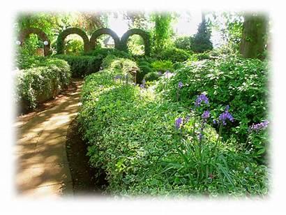 Garden Aura Dev Summer Solstice Celebrating Sound