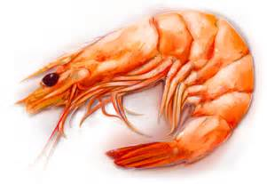 Benefits of Shrimp Animal | HealthyRise.com