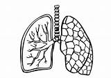 Lungs Coloring Pages Lung Printable Human sketch template