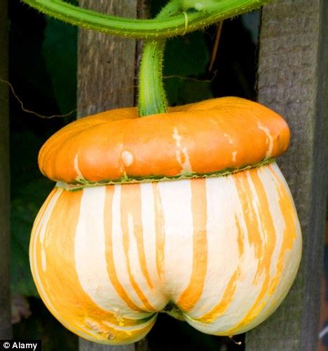 pumpkin re smashing pumpkins they re not just for halloween daily mail online