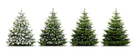 boroondara council collection for christmas trees tree collection reminders municipality of east hants