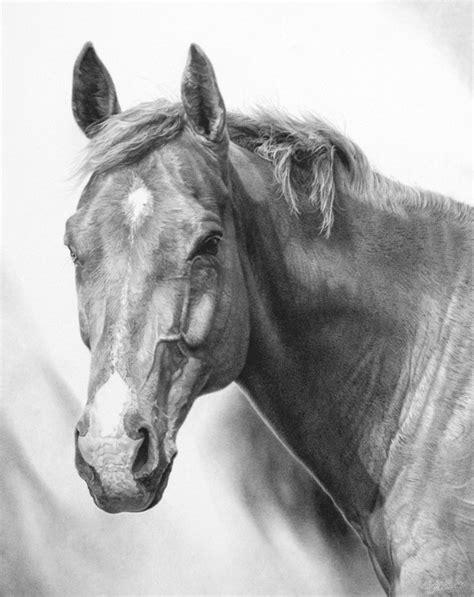 horse pencil drawings drawing ryan horses animals wildlife jacque moon animal equine graphite huntinglife yahoo