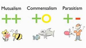 Translate Symbiotic+relationships from English to ...