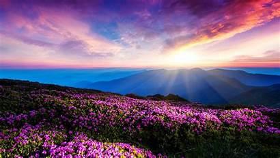 Ukraine Nature Landscape Pink Wallpapers Mountains Flowers