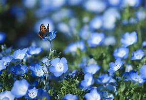 Spring Flowers And Butterflies Desktop Wallpaper | I HD Images