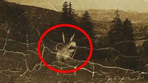 5 Most Mysterious Prehistoric Animals Spotted Alive Today ...