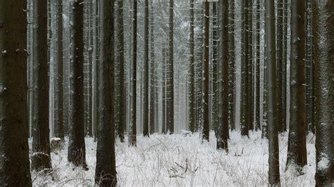 black forest called  black forest