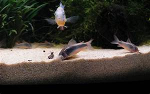 Aquarium Bodengrund Berechnen : kies oder sand im aquarium underwater world ~ Themetempest.com Abrechnung