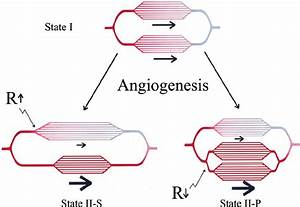 Diagram Showing Angiogenesis In Series And Parallel  In The Addition Of