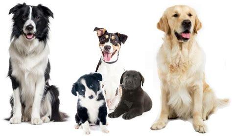 grain  puppy large breed senior dog food  dog rescues