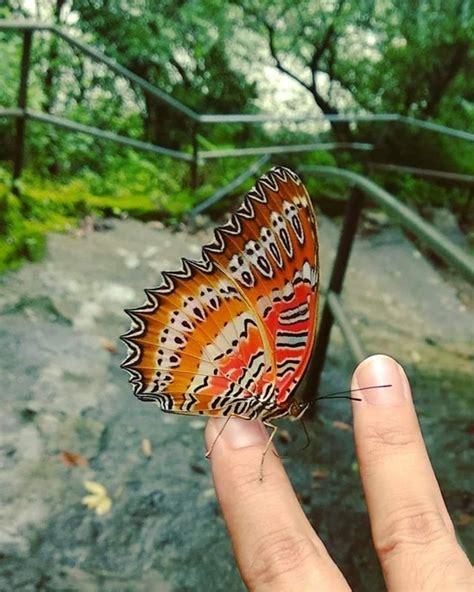 ความสวยแปลกของเหล่าสัตว์โลก ที่มีลักษณะโดเด่นไม่เหมือนใคร ...