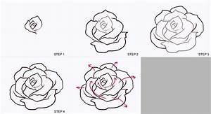 How to Draw a Rose Step by Step for Beginners | at a step ...