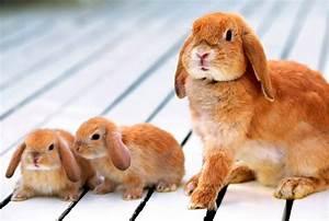 Cuidados de las crías de conejos