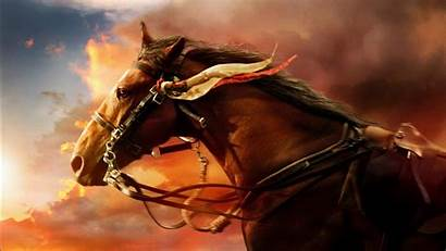 Horse War Wallpapers 1366 1080 1600 Resolutions