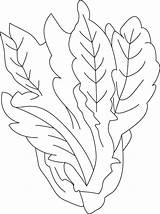 Lettuce Coloring Pages Vegetables Sheet Spinach Vegetable Printable Template Drawings Getcolorings Gourd Squash Colors Recommended sketch template