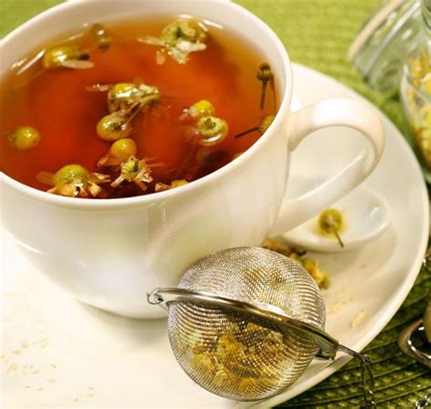 top  plants   herbal teas  benefits herbal
