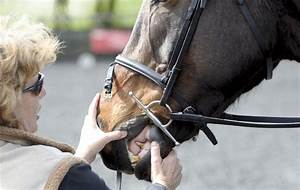 5 Top Tips To Help You Choose The Perfect Bit For Your Horse