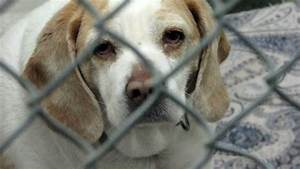 Opt to Adopt- An Animal Shelter Video - YouTube