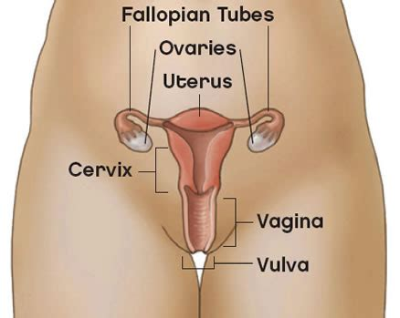 Wanita Rahim Ganda Dian Husada Etika Profesi Hukum Kesehatan Vulva