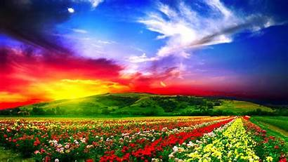 Flowers Colorful Colored Natural