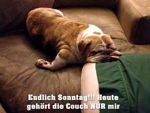Lustige Bilder Sonntag : funpot von funny53 lustige tiere pinterest wochentage sonntag und lustiges ~ Frokenaadalensverden.com Haus und Dekorationen