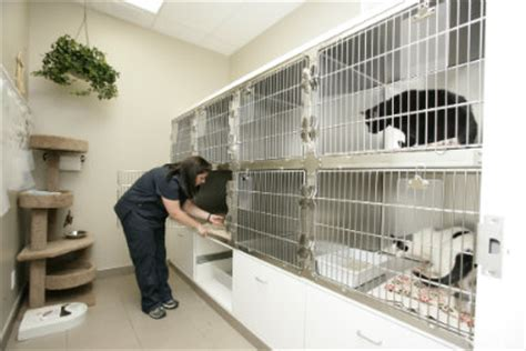clinic  mountainview animal hospital georgetown
