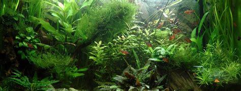 l eau osmos 233 e pour l aquariophilie