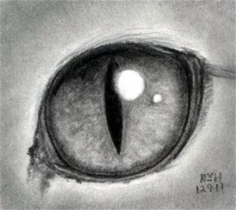 draw  cat eye step  step realistic drawing