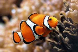 5 of the Ocean's Most Beautiful Fish - Awesome Ocean