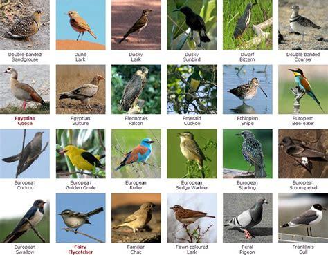 South African Bird Species