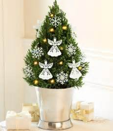 living room ideas for small trees decorated space decorating design ideas vera wedding