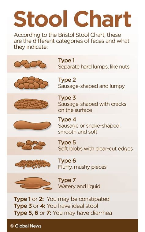 Poop Scoop Everything You Need To Know About Healthy