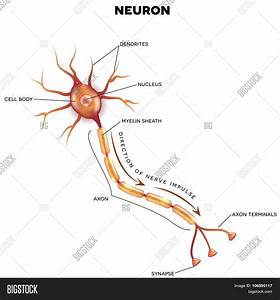 The Neuron Labeled 106895117