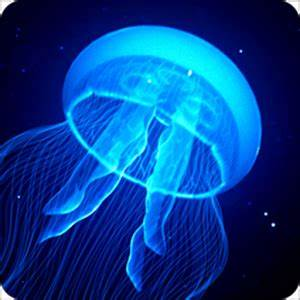 NightLight Jelly Fish Animated Android Apps on Google Play