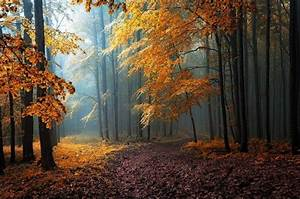 Fall, Mist, Leaves, Forest, Road, Trees, Path, Sunlight, Sun, Rays, Nature, Yellow, Orange, Blue