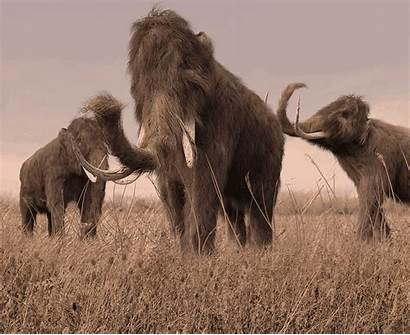 Travel Mammoth Wooly Volunteer Face Ago Possible