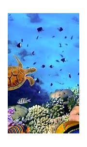 Underwater Wallpapers HD PixelsTalk.Net | 43 Phone Wallpaper