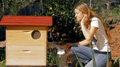 Hive Flow Handle Honey Bee Colmena Beehive