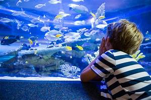 Welche Fische Passen Zusammen Aquarium : der richtige fischbesatz f r ein aquarium haustier blog ~ Lizthompson.info Haus und Dekorationen